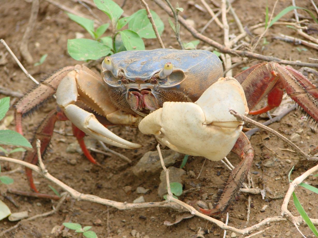 Crabe ewe Vrpgiv1w